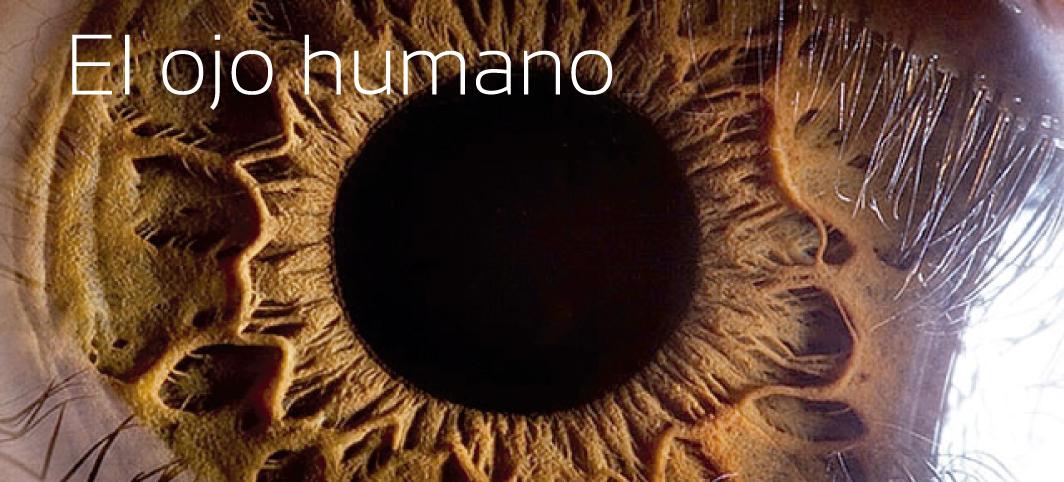 El ojo humano | Centro Oftalmológico Dr. Matías Iglicki